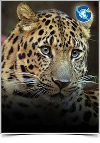 International Journal of Biodiversity & Endangered Species