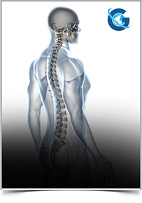Advances in Spine Research