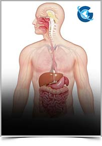 Journal of Gastrointestinal Disorders